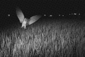 I Need the Owl: Poetry and the Visual thumbnail image